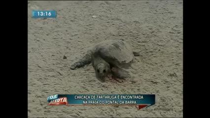 Carcaça de tartaruga é encontrada na praia do Pontal da Barra