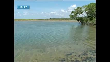 A proliferação de águas vivas no rio Meirim vem chamando a atenção dos órgãos ambientais
