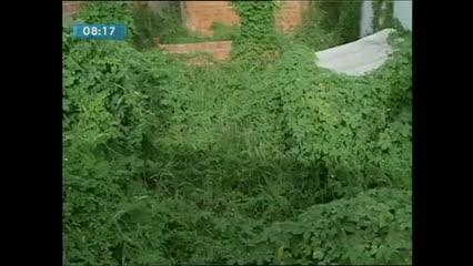 Moradores da Santa Amélia reclamam de terreno abandonado na região