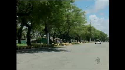 O perigo da queda de árvores em Maceió