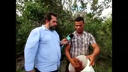 A descoberta da pimenta rosa está transformando vidas em Piaçabuçu