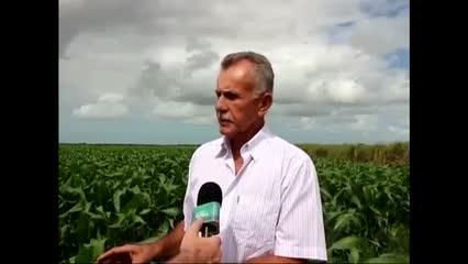 Produção de grãos e sementes próspera em Alagoas