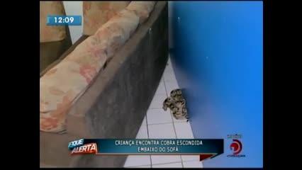 Criança encontrou cobra escondida embaixo do sofá
