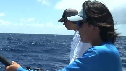 Comportamento de espécies oceânicas