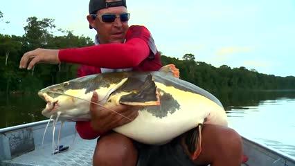 Desbravando o rio Aripuanã em busca dos peixes de couro