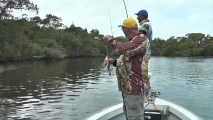Pescaria de robalos e baiacus com iscas artificiais