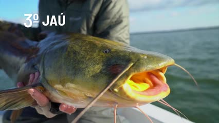 Top Fish TV - Top 5 peixes de couro