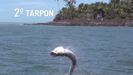 Top 3 maiores peixes pescados na Fish TV