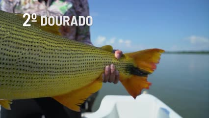 Top Fish TV - Top 3 peixes mais cobiçados