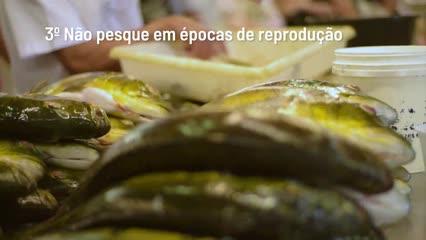 Top Fish TV - Top 5 dicas de preservação