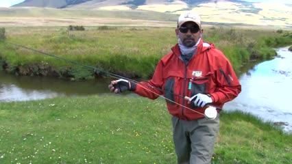 Trutas gigantes em um Spring Creek