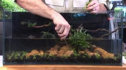 Introdução ao aquário plantado