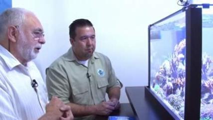 O aquarismo marinho com João Carlos Basso