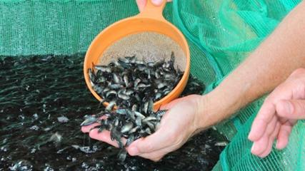 Piscicultura Aquabel