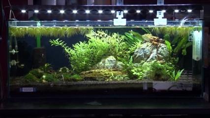 Iluminação para todos os tipos de aquários