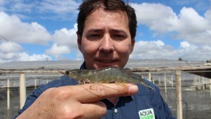 Carcinicultura Intensiva em águas de baixa salinidade