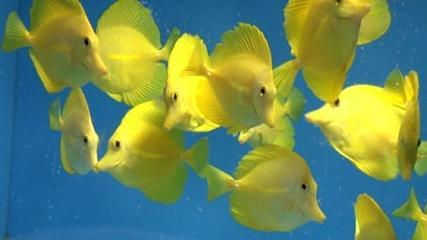Importador de peixes marinhos