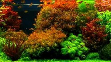 Plantas aquáticas, muito mais do que simples decoração