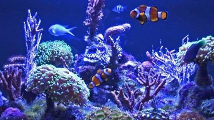 Aquário marinho de corais