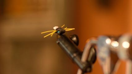 Besouro patagônico