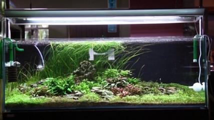 Plantas aquáticas para compor um aquário