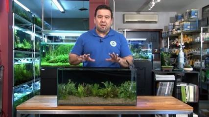 Aquário de plantas naturais para Acará-disco