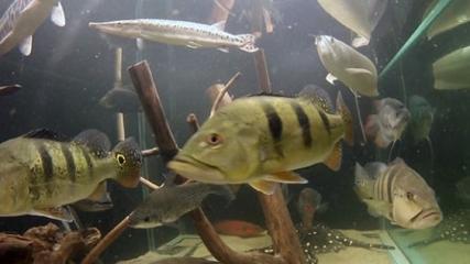 Tendência: Saiba mais sobre o Aquarismo jumbo