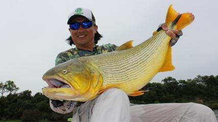 Pesca de dourado no rio Paraná, Argentina
