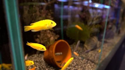 Conhecendo lojas de aquarismo em Miami