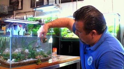 Manutenção e limpeza de aquário - Parte 2