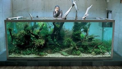 Vida e obra de Takashi Amano