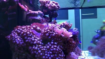 Aquário de corais