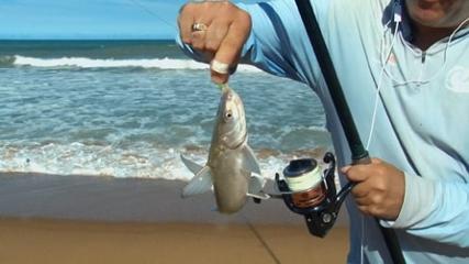 Dicas sobre arranque na pesca