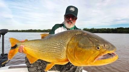 Plugs para monstros dourados do rio Paraná