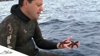Aquarismo em ambiente natural