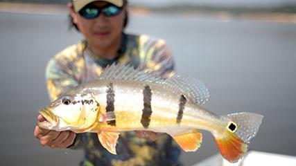 Manaus: pesquisa, ciência e pesca esportiva