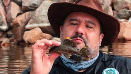 Captura e distribuição dos peixes ornamentais