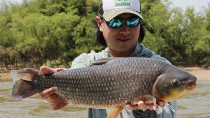 Pescaria de piauçu no rio Miranda