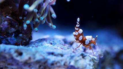 Os incríveis aquários do Museu de Kalsruhe