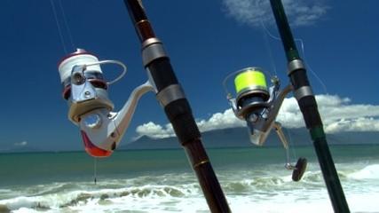 Iscas naturais frescas para pescaria variada