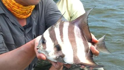 Influência de maré na pescaria em rios de mangue