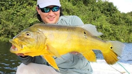 Pesca de tucunaré-amarelo na cheia do rio teles pires