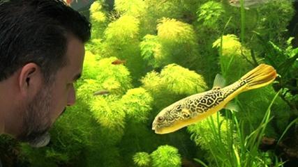 Os impressionantes aquários de Kalsruhe