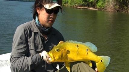 Biopesca - Prospecção de espécies no rio Tapajós