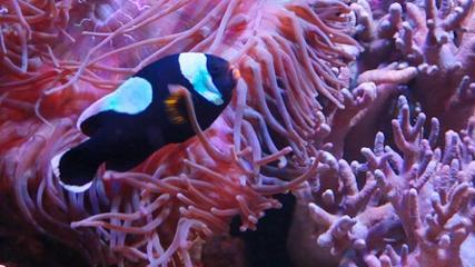 Aquarismo ruma à região norte do Brasil