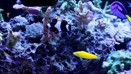 Aquários marinhos de peixes e corais