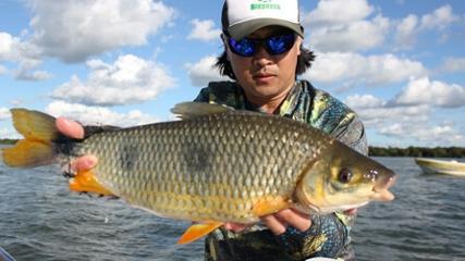 Técnica da pingadinha na pesca de piapara na Argentina