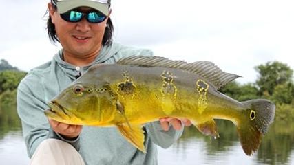 Tucunaré-amarelo na cheia do rio Teles Pires
