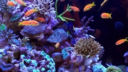 Feira Interzoo 2014: tendências do mundo do aquarismo