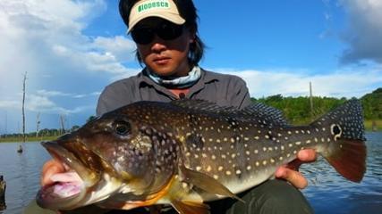 Técnica de pesca com iscas de superfície